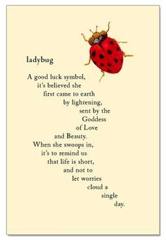 Ladybug--a good luck symbol. It's believed she first came to earth by lightening, sent by the Goddess of Love and Beauty. If she presents herself to you, it is to remind you that life is short, and not to let worries cloud a single day. Ladybug Meaning, Ladybug Quotes, Lady Bug Tattoo, Good Luck Symbols, Goddess Of Love, Norse Goddess, Spirit Guides, Me Quotes, Baby Quotes