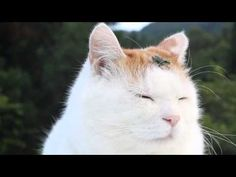 Cat With a Tiny Frog on Its Head Is the Most Zen Cat Ever