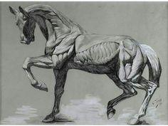 Écorché & Écorché de cheval - Alain.R.Truong