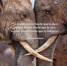 El amor es mas fuerte que la violencia