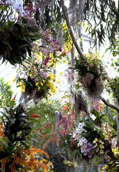 "Grand Finale.  ""Orchids represent the height of evolutionary success in the plant kingdom,"" the show states."