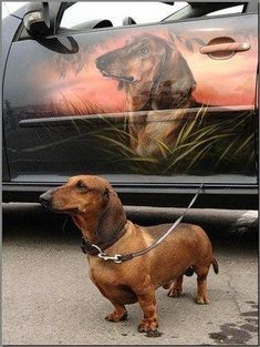 """I had it customized!"" #dogs #pets #Dachshunds Facebook.com/sodoggonefunny"