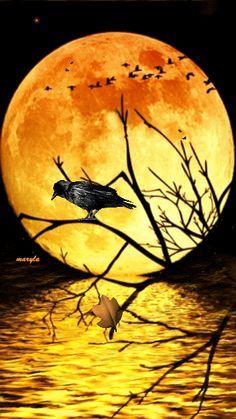 Moon rays!