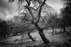 https://flic.kr/p/RvJFxa | Orchard | Orchard