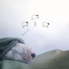 Adorable Bull Terrier Stars in Owner's Imaginative Illustrations - My Modern Met