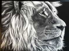 black and white lion scratch art