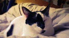 Mona - www.ataleoftwocats.co.uk Trending Memes, Funny Jokes, Cats, Gatos, Husky Jokes, Cat, Jokes, Kitty, Hilarious Jokes