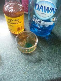 Fruit fly catcher concoction: 1 drop dawn, cup cider vinegar