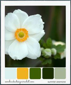 A little bit of summer by serge fenix photo 130291611 500px summer anemone colour palette mightylinksfo