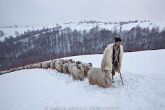 photo credit: Marian Mocanu, Romania
