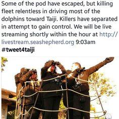 #tweet4taiji #tweet4dolphins #dolphinproject #coveguardians #seasheperd #stopanimalcruelty #ShutTaijiDown