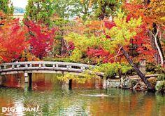 京都必看楓葉景點-永觀堂