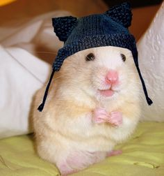 Tiny Hat With Ear Flaps | Community Post: Tiny Hamsters Wearing Tiny Clothes