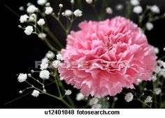 Pink Carnations are my favorite flower, because they were my Grandma's favorite. Also luv the dyed aqua blue ones. I wish my Husband would remember this (after 34 yrs)  :-)