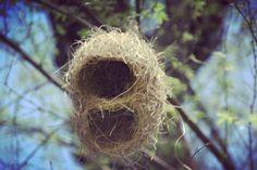 Ocean, Bird, Outdoor Decor, Home Decor, Decoration Home, Room Decor, Birds, The Ocean, Home Interior Design