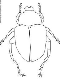 Drawing of dung beetle clearly shows different body parts (study for art project)