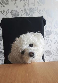 Whatcha starin at Maltese Tattoo, Perros French Poodle, Bichon Havanais, Baby Animals, Cute Animals, Cute Dogs And Puppies, Doggies, Labrador Retriever Dog, Beautiful Dogs