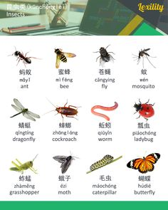Learn Chinese, English, Russian & German vocabulary fast in a fun, easy, efficient and entertaining way. English Language Learning, Learn A New Language, Foreign Language, Russian Language, German Language, Spanish Language, French Language, Mandarin Lessons, Learn Mandarin