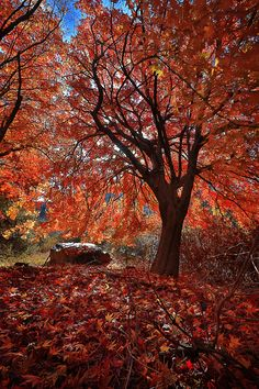 Shade of  Autumn by Sutrisno