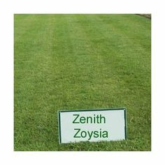 Years ago people use to complain about the zoysia grass going brown very quickly in the fall season, and also taking a long time to recover and turn in to a lush green lawn again.     They have improved the zoysia grass seed mix with modern varieties now so this is not a problem any more, although heavy thatch can be a problem with this modern type but a good maintenance regime and good aeration can prevent this occurring.