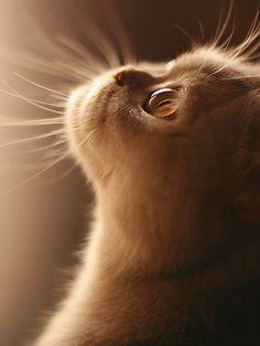 Dios Mio: te prometo ser el mejor de los gatos, no enredarme en la lana, no…
