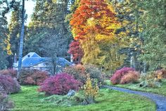 Autumn on Dumfries Estate near Cumnock