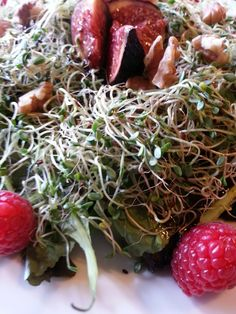 sprouts « RAW FOOD etc