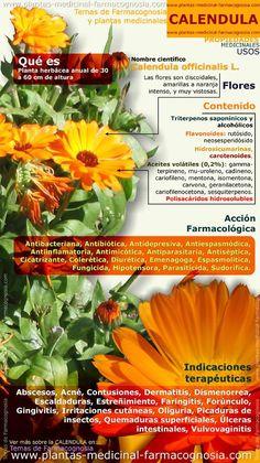 Propiedades y beneficios de la calendula. #Infografía. http://www.plantas-medicinal-farmacognosia.com/productos-naturales/calendula/?utm_content=buffer3b7e8&utm_medium=social&utm_source=pinterest.com&utm_campaign=buffer
