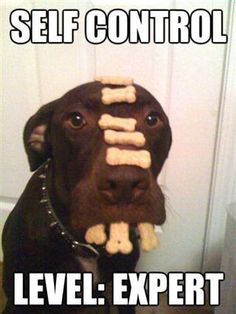 What a funny dog! For more hilarious dogs pics visit www.bestfunnyjokes4u.com/funny-dog-pics/