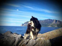 Husky, Dogs, Animals, Animais, Animales, Animaux, Pet Dogs, Doggies, Animal