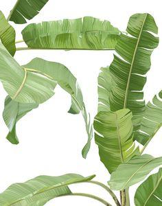 23 Clever DIY Christmas Decoration Ideas By Crafty Panda Botanical Wall Art, Botanical Prints, Plant Illustration, Botanical Illustration, Tropical Leaves, Tropical Plants, Banana Art, Plant Aesthetic, Tropical Wallpaper