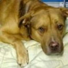Manhattan NY.  Buddy.  Neutered 2 years old.  Dies in a.m.  See Urgent Part 2 on fb.