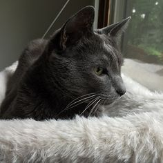 Patterns - Curious Cats Window Perch
