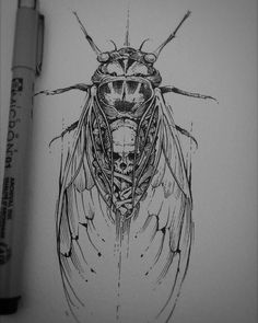 🇧🇷 More cicadas. Tattoo Sketches, Tattoo Drawings, Cool Drawings, Body Art Tattoos, Illustration Sketches, Art Sketches, Rabe Tattoo, Beetle Tattoo, Insect Art