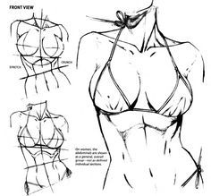 Character Anatomy | Breast on Pinterest | Character Design References, Character Design and How To Draw Manga