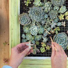 Elle plante une Succulentes dans un endroit peu commun! Quand j'ai vu le résultat! J'en veux un!! - Bricolages - Trucs et Bricolages