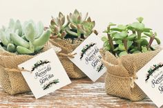 Suculentas Cactus, Burlap, Succulents, Centerpieces, Birthdays, Christmas Gifts, Place Card Holders, Baby Shower, Pretty