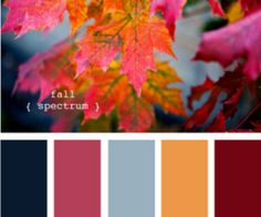 Fall Spectrum : design seeds