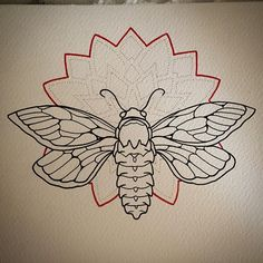cicada tattoo traditional - Google Search