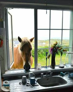Life on the Aran Island Ireland Country, Island Crafts, Irish American, American Girl, Irish Eyes Are Smiling, Irish Men, Nature Animals, Childhood, Make It Yourself