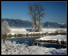 This photo from British Columbia, Western is titled 'Winter Wetlands'. Fraser Valley, Come And See, British Columbia, Westerns, North America, Traveling, Canada, River, Mountains