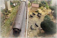 CIWL atravesando Castilla. Escala H0.  Coches CIWL circulando por las dehesas castellanas junto a una ganadería de toros bravos.