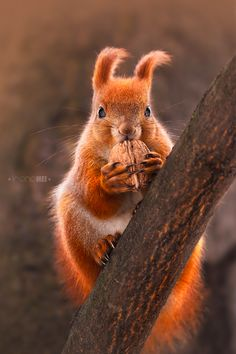 Autumn... time to dig up those nuts & have a feast!