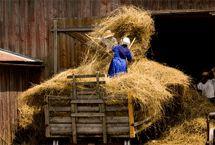 """So much HAY!""  .........Amish life"