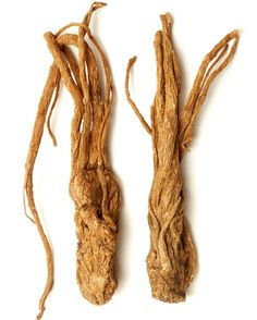 Dong quai root is useful for menstrual cramps, irregularity, delayed flow and weakness during the menstrual period.