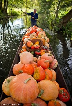 Farmer Harald Wenske punts his boat loaded with pumpkins over a small canal