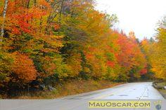 Floresta do White Mountains no Outono New Hampshire