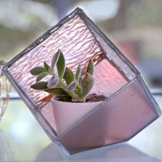 A place for your plants to call home? Learn how to make a DIY terrarium using iridescent glass plates, here. A place for your plants to call home? Learn how to make a DIY terrarium using iridescent glass plates, here. Stained Glass Designs, Stained Glass Projects, Stained Glass Patterns, Stained Glass Art, Mosaic Glass, Making Stained Glass, Mosaic Patterns, Terrarium Diy, How To Make Terrariums