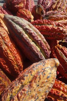 Chocolate is made from the seeds that grow inside beautifully colored cacao pods that grow on cacao trees. Learn more about chocolate from indi chocolate. Spice Rub, Few Ingredients, How To Make Chocolate, Diy Cleaning Products, Cocoa Butter, Body Care, Yummy Treats, The Balm, Seeds