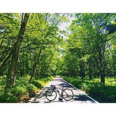 【ta_chinn777】さんのInstagramをピンしています。 《中禅寺湖の千手ヶ浜に向かう途中の一本道。ここは、自転車かバスしか通れないのでサイクリングにはもってこい!! #ロードバイク #中禅寺湖 #サイクリング #自転車 #日光 #roadbike #森林》